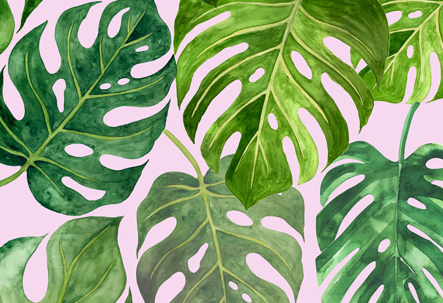 Green Leaf Monstera Deliciosa Wallpaper Wall Mural design