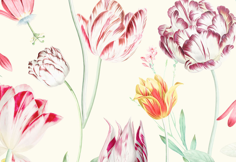 Close-up of Tulipina Flowers Wallpaper Mural