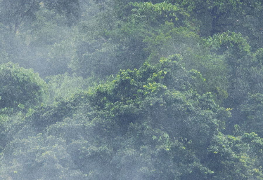 Misty Forest Treetops detail view