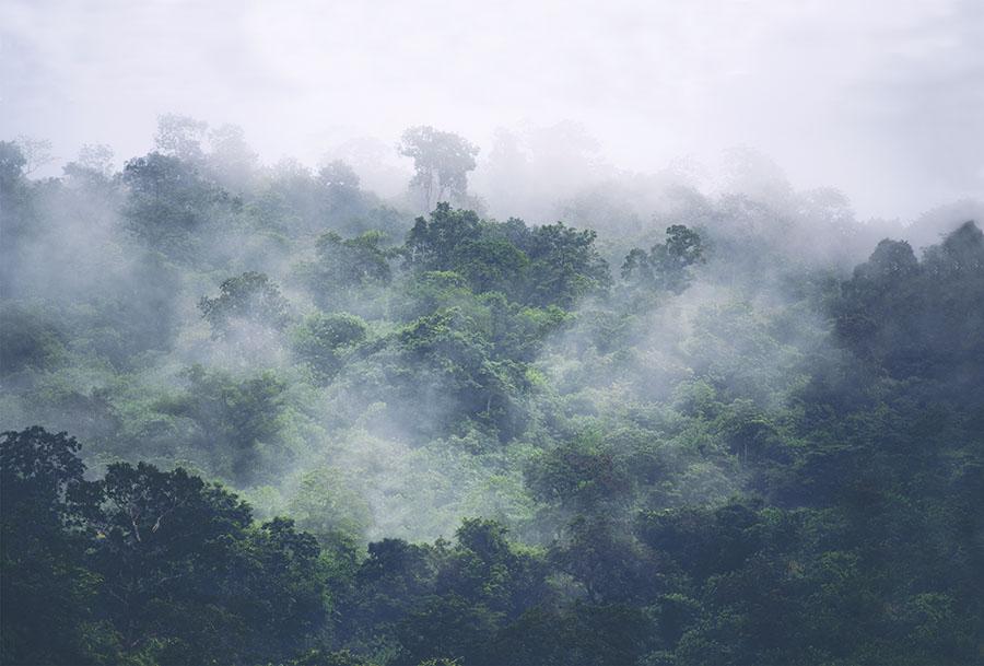 Misty Forest Treetops Photo wallpaper