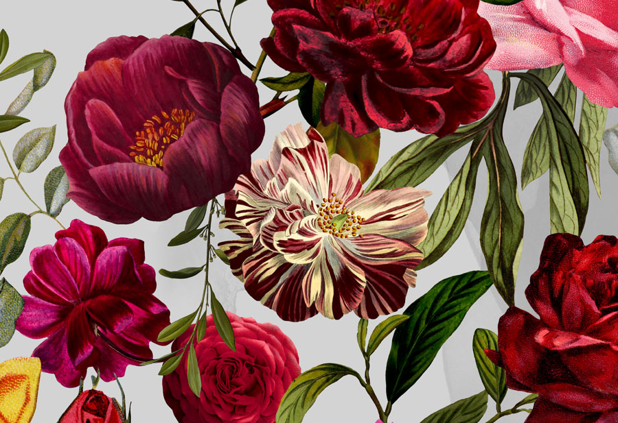 Velvet Roses Wallpaper close up detail view