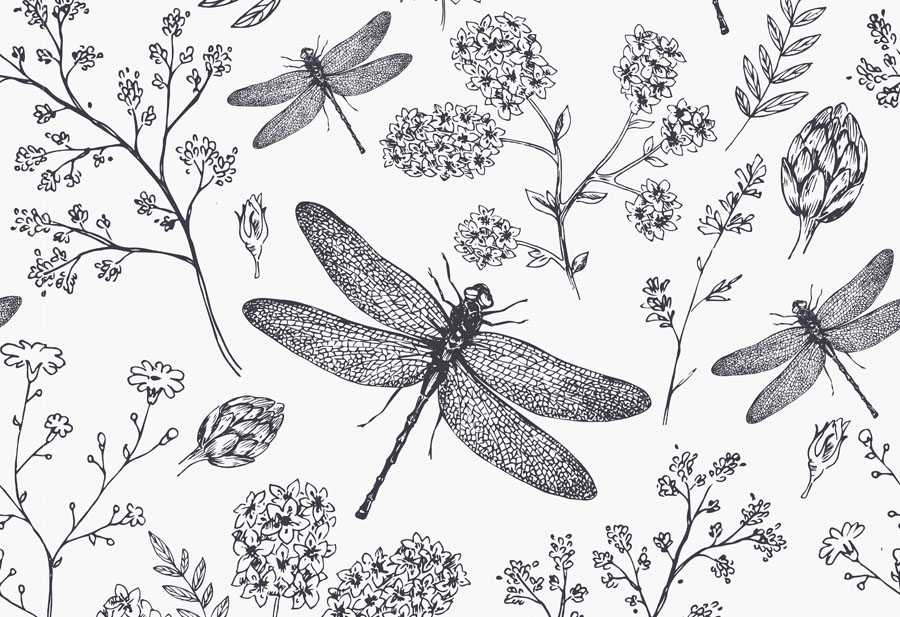 Dragonfly Wallpaper Mural close up view