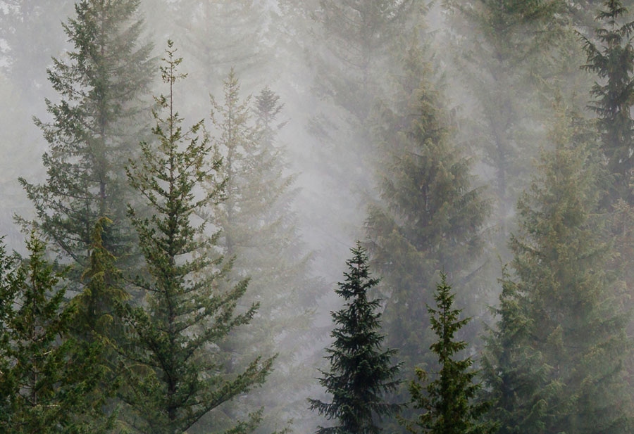 Misty Forest Landscape close up view